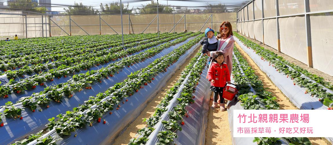 竹北親親果農場,採草莓