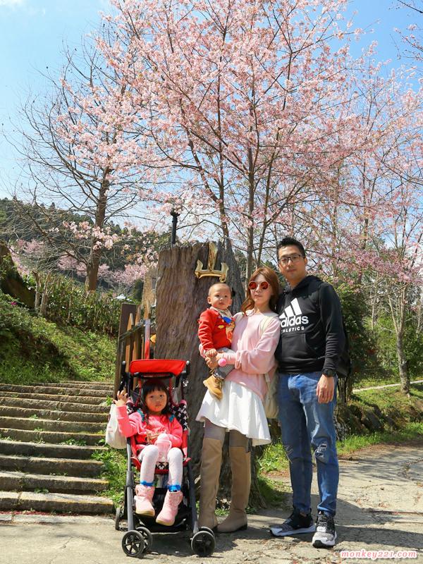 ★新竹★山上人家森林農場,吉野櫻櫻花滿開美極了