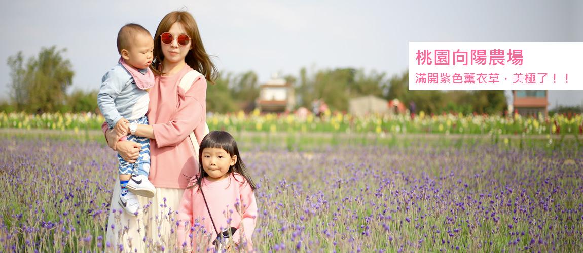 桃園向陽農場,薰衣草紫色花海