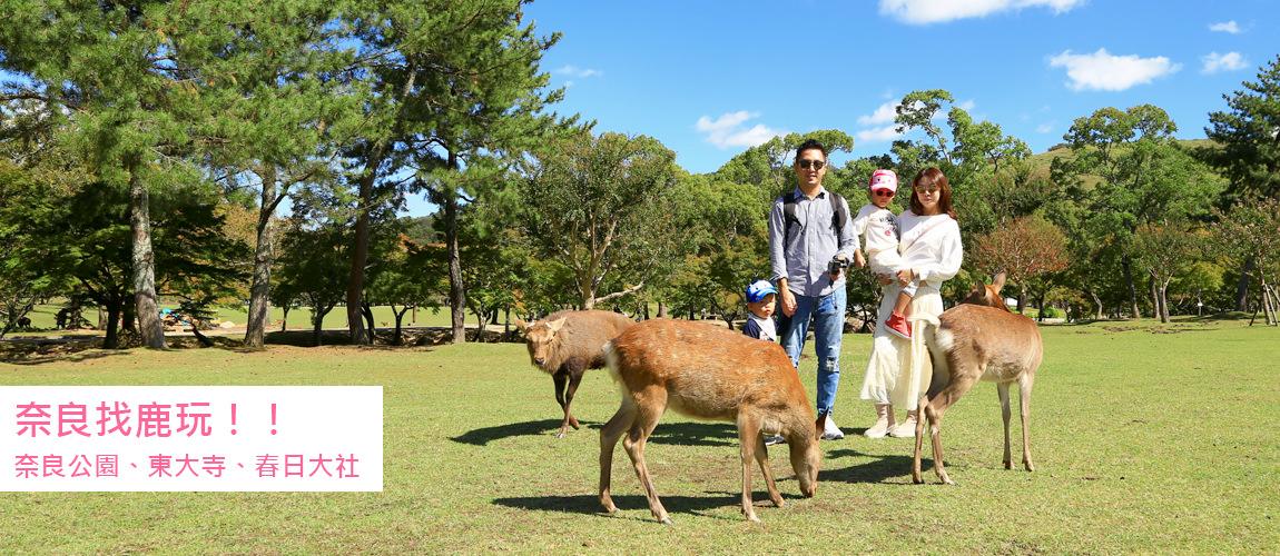 奈良找鹿玩
