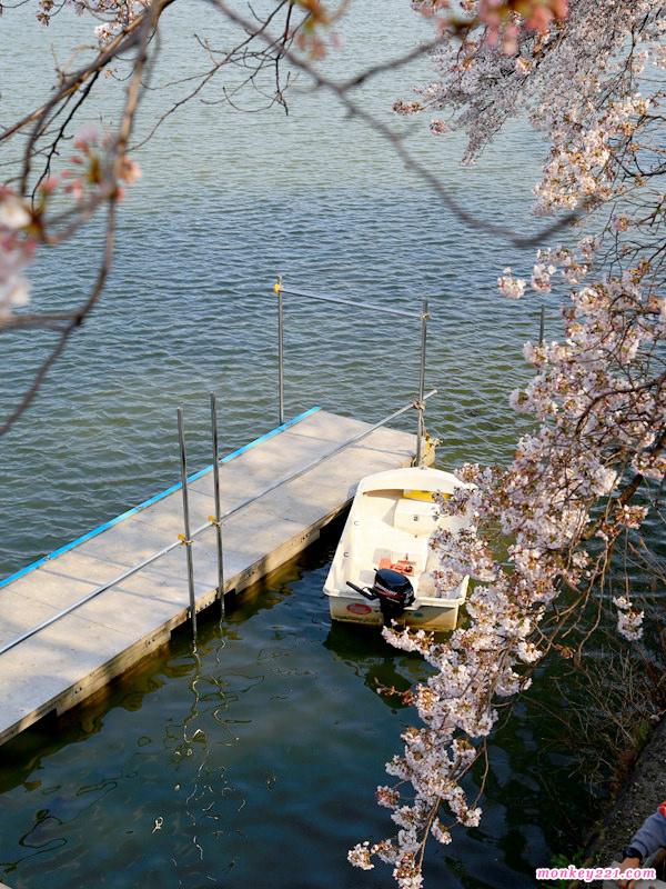 20170402東京賞櫻河口湖_2-5-2.jpg