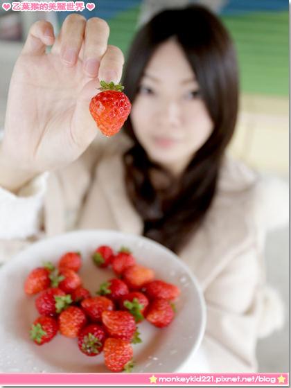 ★苗栗★大湖山頂果園農場,採草莓健康又美味