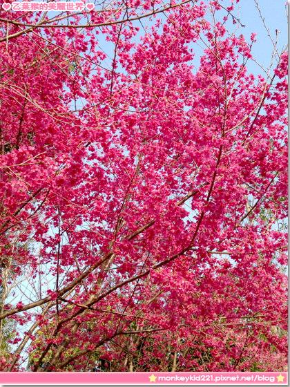 20140203農曆春節_5-9.jpg