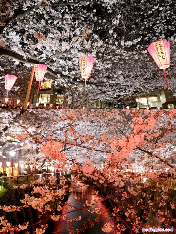 20170402東京賞櫻河口湖_2-6-4.jpg